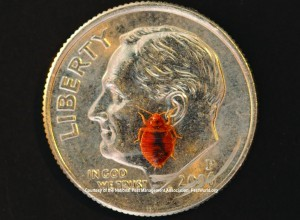 Bed Bug on Coin